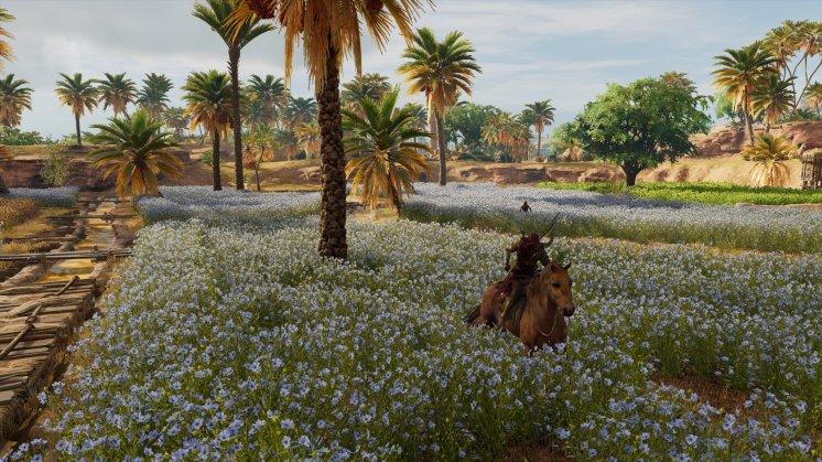 Assassins Creed Origins   Blumenfelder