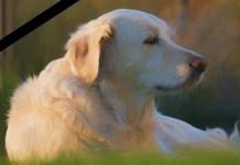 Cão olhando longe