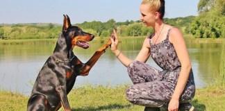 Mulher brincando com o cão