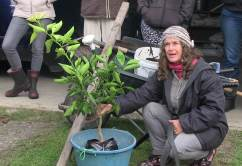 Gisella leading Tree Crops module