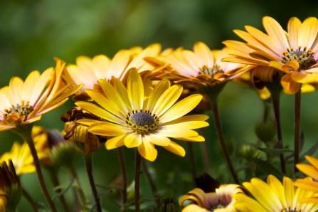 flower, yellow, spring, Bolsena, nature, outdoor
