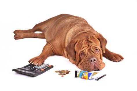 dog gone broke
