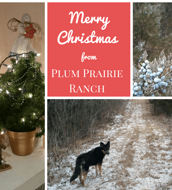 Merry Christmas from Plum Prairie Ranch