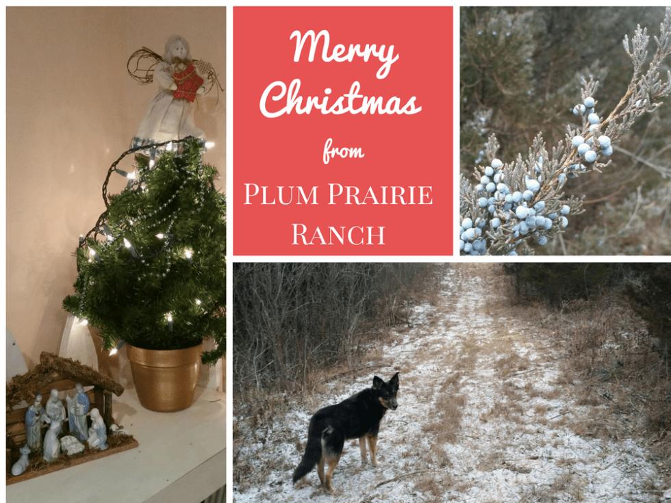 Merry Christmas from Plum Prairie Ranch