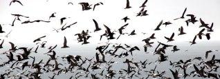 birdsshipping