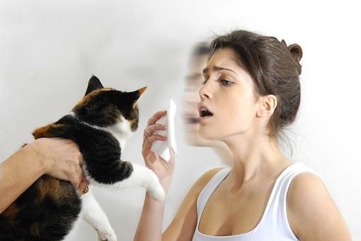 Alergias-Em-Gatos-1