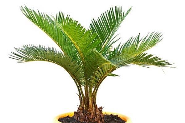 qualite-air-palmier