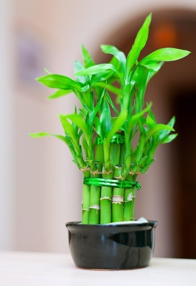 les 7 meilleures plantes avoir dans sa salle de bain. Black Bedroom Furniture Sets. Home Design Ideas