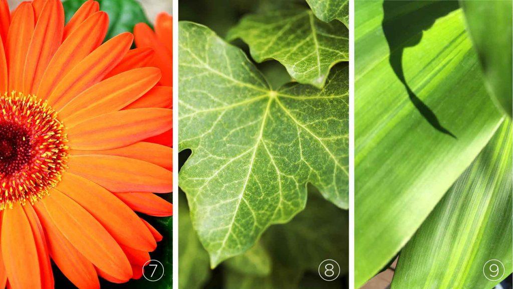 La NASA Recommande Une Liste De Plantes Vertes Dites