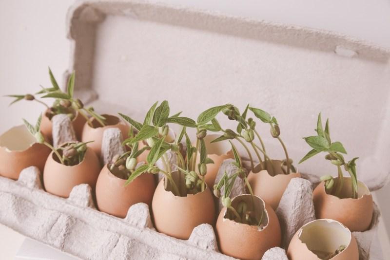 Coquille d'œufs pour faire vos semis de graines.