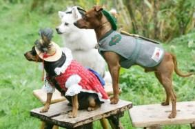 Fashion für den Hund