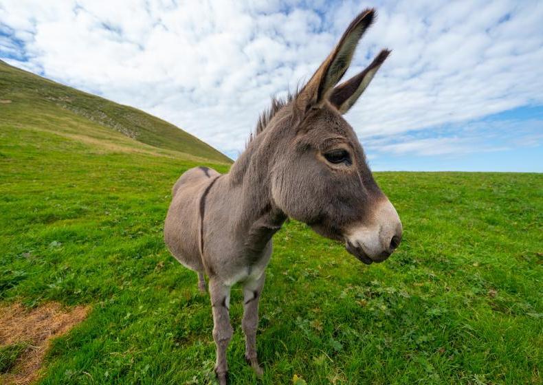 Esel auf der Wiese | Credit: Dimitri Photography | Unsplash