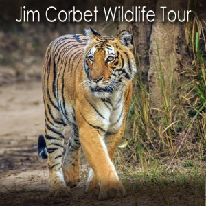 Jim Corbett Wildlife