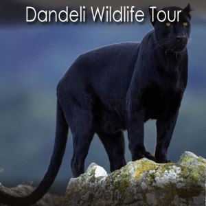Dandeli Wildlife