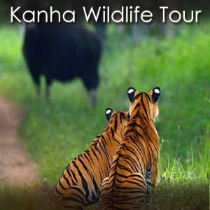 Kanha Wildlife