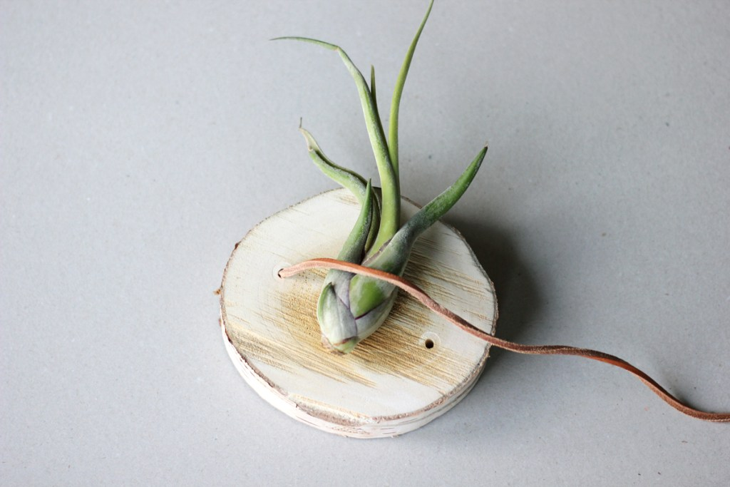 DIY wooden air plant hanger