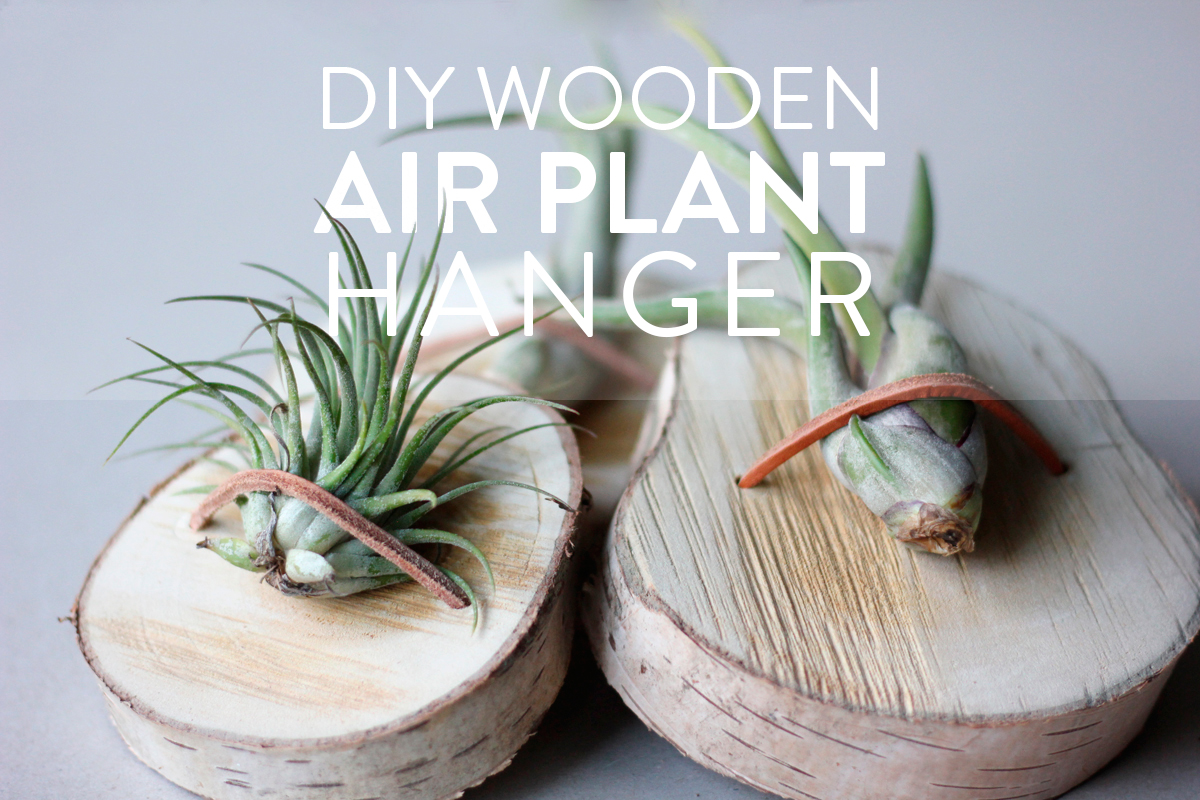How to make a wooden air plant hanger