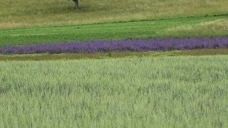 Violettes Feld