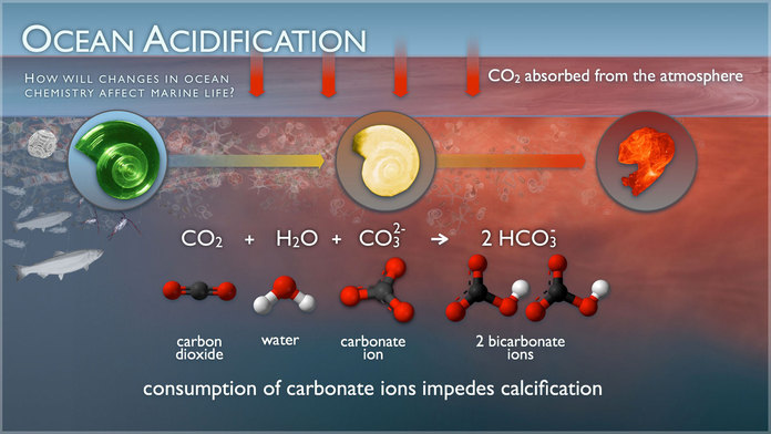 Ocean Acidification Illustration