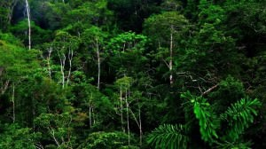 Introduction • equatorial regions are located in a band around the equator and cover about 6% of the earth's surface. Rainforest Climate Tropical Evergreen Climate Pmf Ias