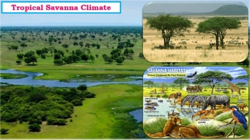 Savanna Climate or Tropical Wet and Dry Climate