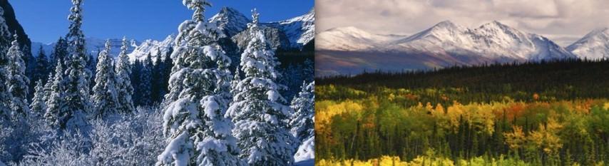 Taiga Boreal Climate - vegetation-summer winter