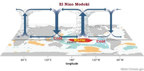 el nino modoki walker cell