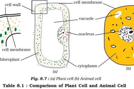 Diagram of animal cell for class 8 path decorations pictures science year eight middle junior maroochydore high school animal cell plant cell structure as biology different types of plastids animal venn diagram goal ccuart Images