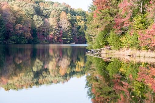 Oak On The Water