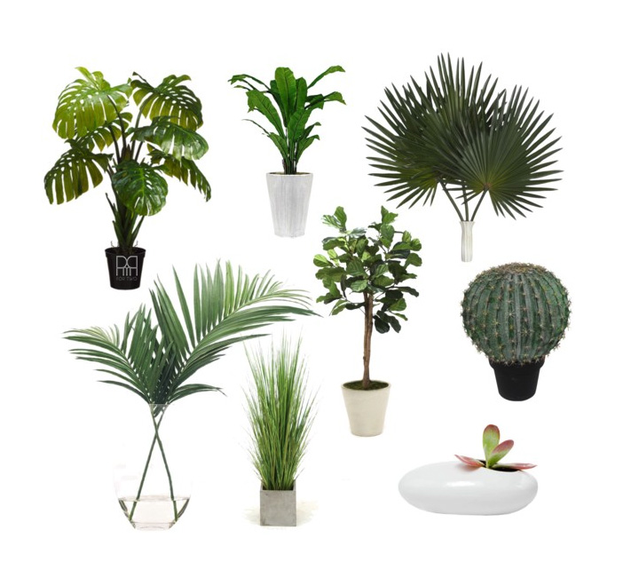 Plants for Florida Room