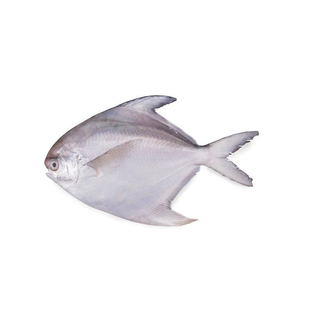 Fish Pnf Lk