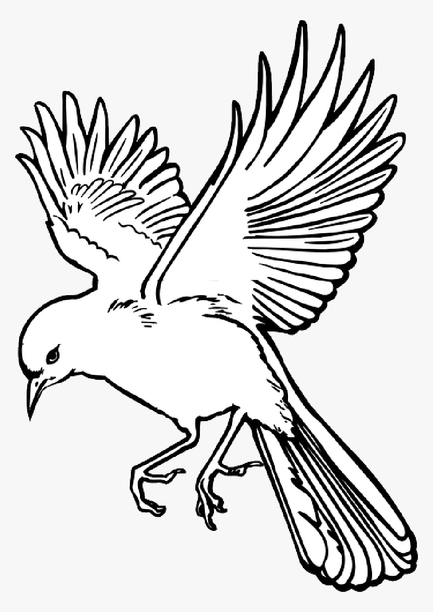 Bird Wings Landing Line Drawing Bird Flying Hd Png Download Transparent Png Image Pngitem