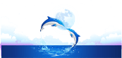 Download Dolphin Transparent Water Png Woor 48 X 72 Inches