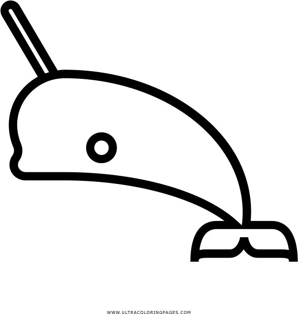 Download Narwhal Coloring Page Coloring Book Full Size Png Image Pngkit