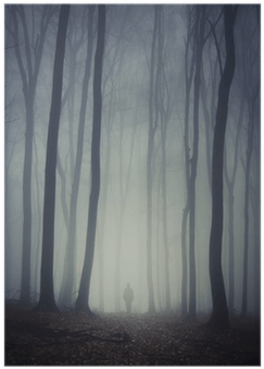 Queen of the forest is a unique · destiny leather inventory icon.png. Download Man Walking On Path Through Spooky Dark Forest Poster Still Life Full Size Png Image Pngkit
