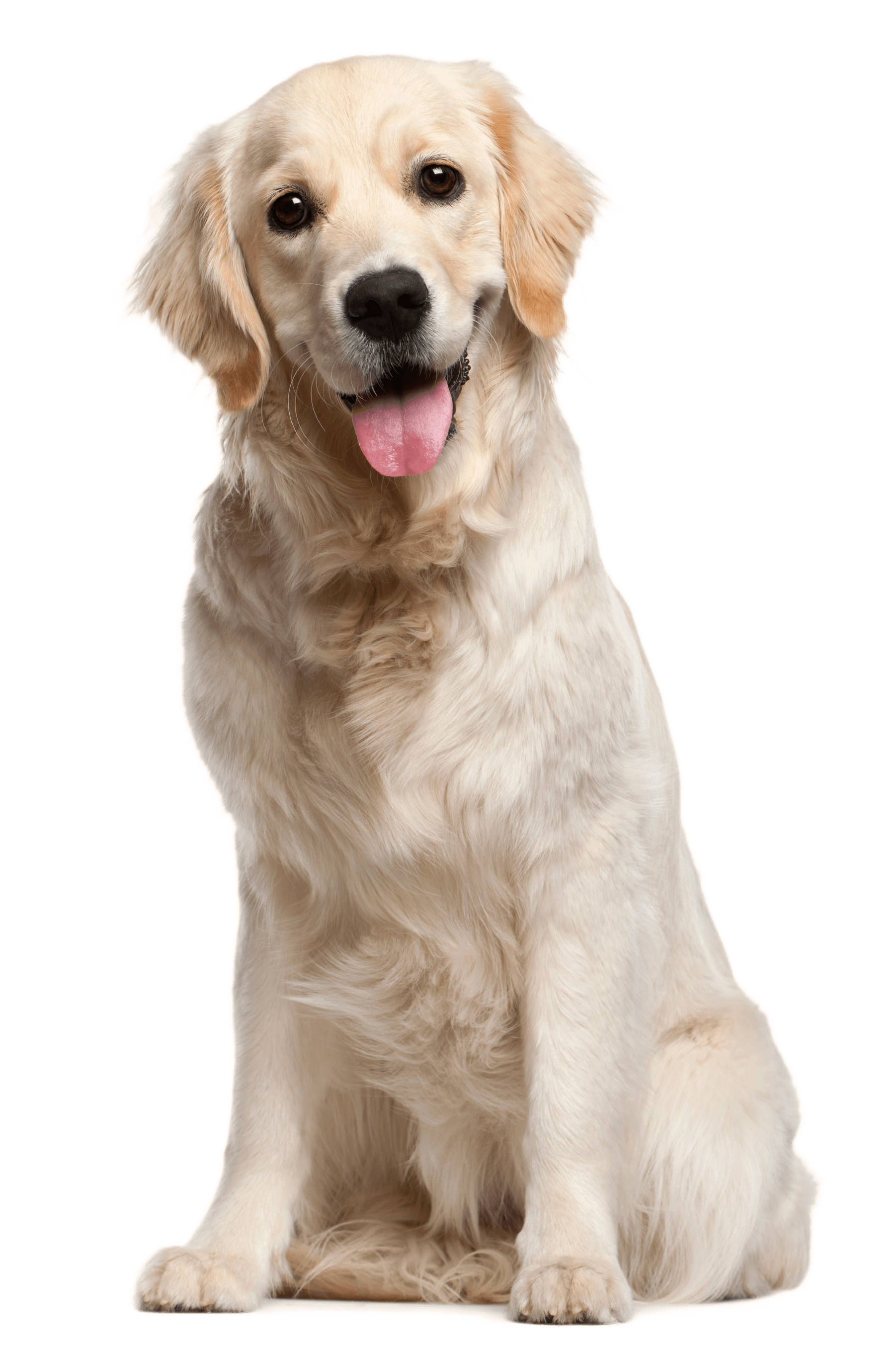 Image result for dog png