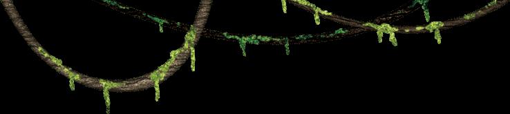 Hanging Plants Wall