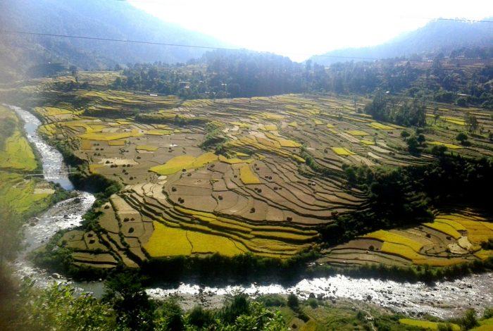 नेपालको अर्थतन्त्रमा धानको महत्व