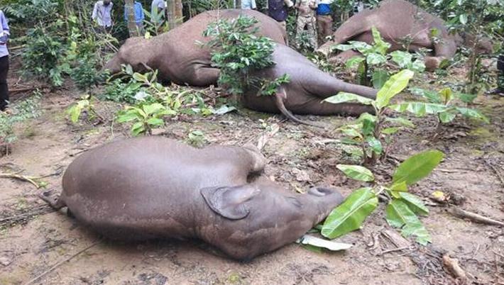 तान्जानियामा अज्ञात रोगबाट आठ हात्ती मरे
