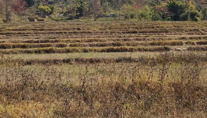 खडेरीले खेतीयोग्य जमीन बाँझै