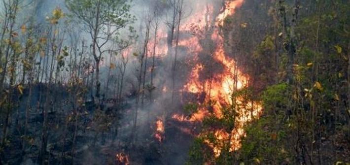 एक महिनादेखि जङ्गलमा भीषण आगलागी, आगो निभाउने क्रममा महिलाको मृत्यु
