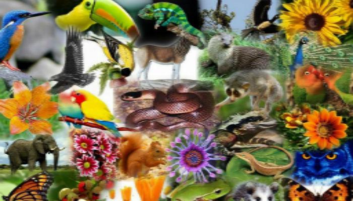 जैविक विविधताबारे अन्तरक्रिया