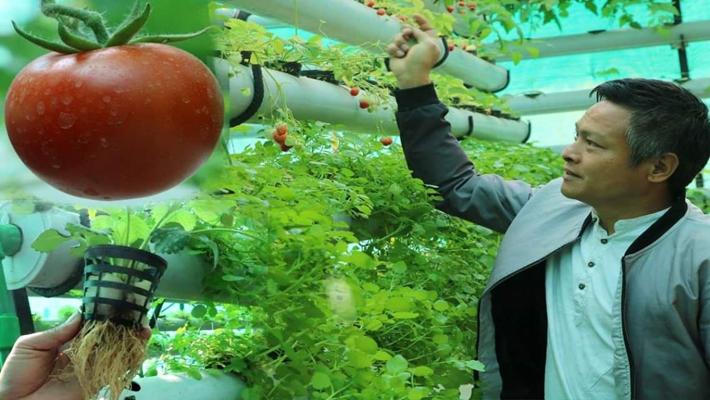 माटो विना पानीमा तरकारी खेती, घरको छतमै घना जंगलरी {भिडियो सहित }