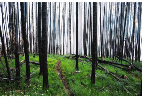 A Snag Forest on the PNT