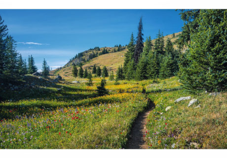 Wildflower Filled Meadows on the PNT