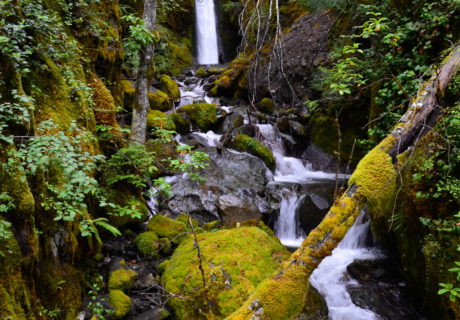 A Waterfall in a Temperate Rainforest