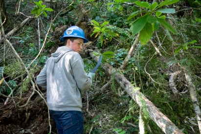 A crew member pauses to perform a safety check while using a hand saw to buck a down tree across the trail.