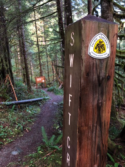 A PNT trail marker shows the way on the Mt Baker-Snoqualmie NF