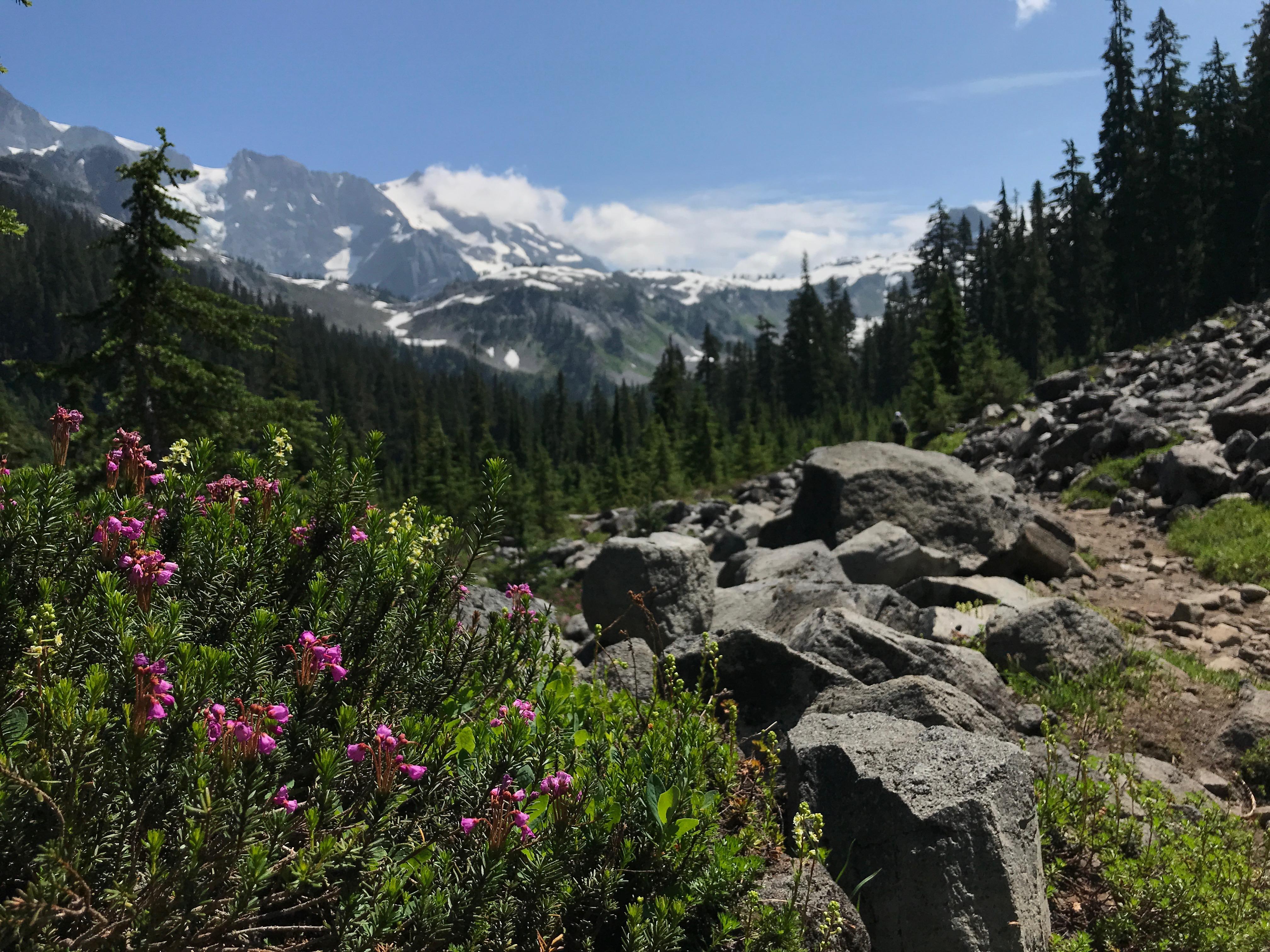 Swift Creek Trail 607
