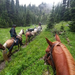 Volunteer packers with the Back Country Horsemen of Washington deliver a resupply to the crew